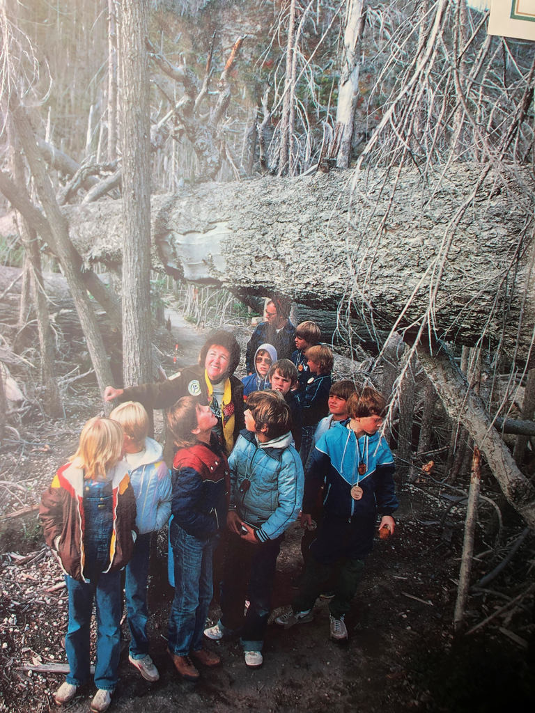 Allene Wodaege and Ron Ward take fifth graders on a field trip to the Mount St. Helens eruption site in 1983.